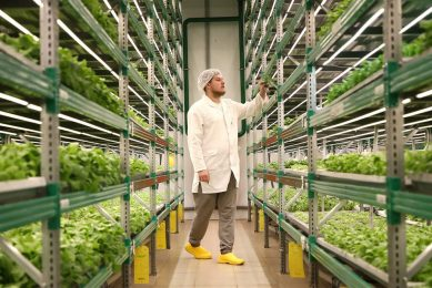 Vertical farming. - Foto: ANP