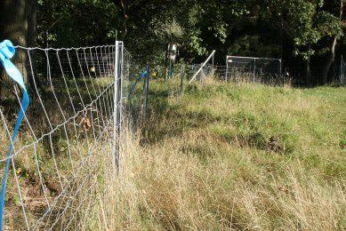 Een stuk van het bestaand hekwerk tegen de Poolse grens. Dit is circa 1,20 meter hoog en ligt een halve meter over de grond, zodat zwijnen er niet onderdoor kunnen. - Foto: Kees van Dooren