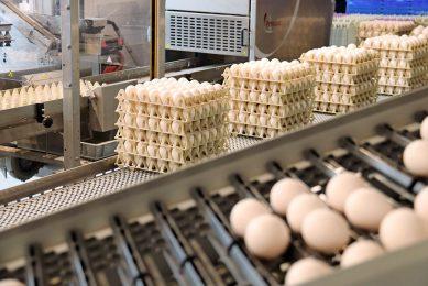 Het aanbod van witte scharreleieren is ruimer dan van bruine, en het prijsverschil tussen witte en bruine is groter dan een jaar geleden. - Foto: Hans Bijleveld
