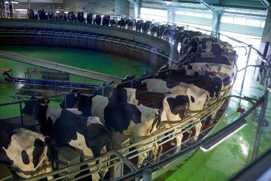 Voor een gezonde toekomst van de Australische zuivelsector moet de melkproductie omhoog, zegt Rabobank. - Foto: Canva