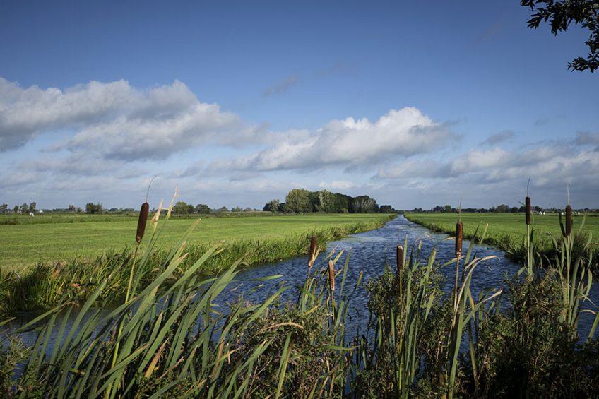 AgriNl wil zowel een oplossing voor de stikstofproblematiek, als perspectief voor landbouw en ruimte voor natuur. - Foto: Roel Dijkstra