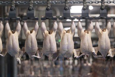 Door het opheffen van coronamaatregelen verbeteren de vooruitzichten voor de Europese pluimvee-industrie.
