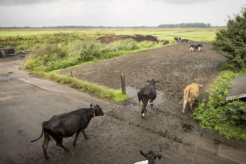 Melkveebedrijf in een Natura2000-gebied. - Foto: Koos Groenewold