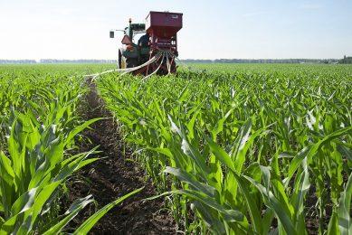 Vanggewas zaaien in mais. Samen met onder andere extensievere bouwplannen draagt dit bij aan robuustere landbouw. - Foto: hans banus