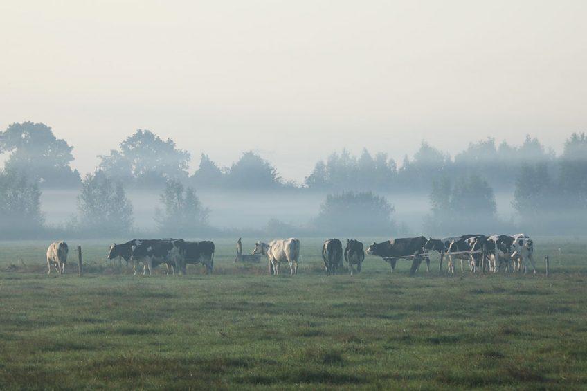 Foto: Henk Riswick