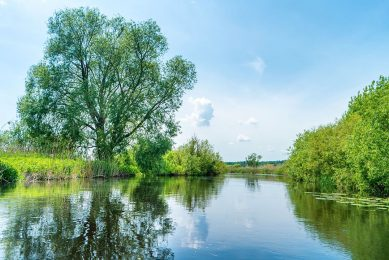 De concentraties aan nitraat zijn zowel in het oppervlaktewater als het grondwater sinds 1991 gedaald. Maar de afgelopen tien jaar stokt de vooruitgang. Foto: Canva