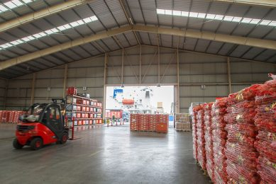 Uien worden geladen voor export naar Senegal. - Foto: Peter Roek