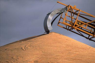 Het aandeel van Australië in de wereldwijde tarwe-export zal dit seizoen mogelijk toenemen tot 12%. Foto: Canva